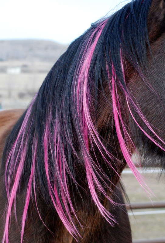 Colorful Manes And Tails Home